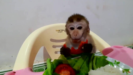 刚起床的小猴子坐在儿童餐椅上,拿起午饭就开吃真好吃