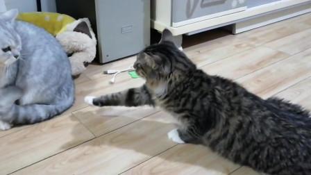 猫咪:我尽力了,不是我不敢动手,我是真的够不着