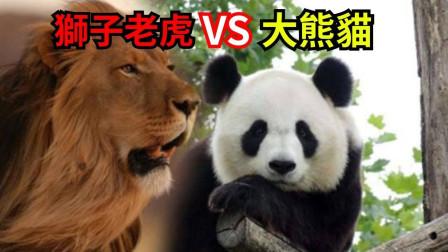 老虎狮子都打不过熊猫,这是为啥,国宝:不去看看老子以前叫啥?