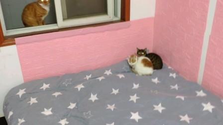 今天给房间里粘了新的墙纸,给猫咪们弄了一张床,买了新的大的电热毯,让猫咪们晚上睡电热毯,白天可以晒到太阳。