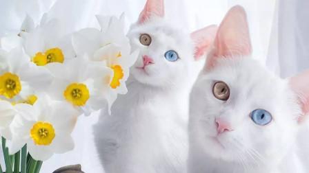 曾经的山大王化身可爱猫咪,给钱就让随便摸?网友:我要撸个够!