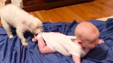 宝宝太调皮,被狗狗猫咪管教,小主人快点长大呀