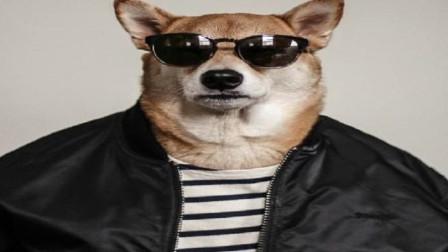 """世界上第一只""""男装犬模"""",年薪高达几百万,网友:活的不如狗!"""