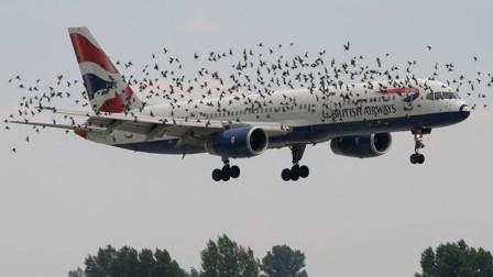 当高速飞行的飞机撞到小鸟,会产生什么严重后果?看完头皮发麻