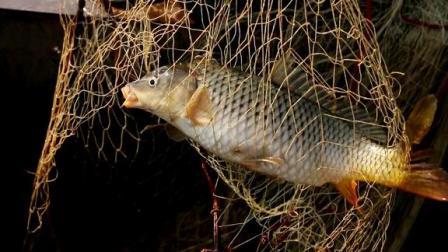 农村野河撒网,小伙这网撒的真漂亮,小浪里每网都有红尾大鲤鱼!