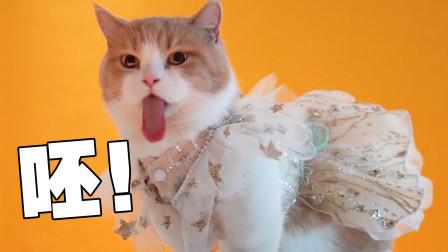 作死挑战:带5只猫出门拍照是什么感觉?