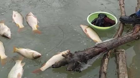 农村大叔来河里冰钓,一上午的鱼获就这么多,真让人羡慕啊!