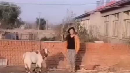 羊助你一臂之力,火不火