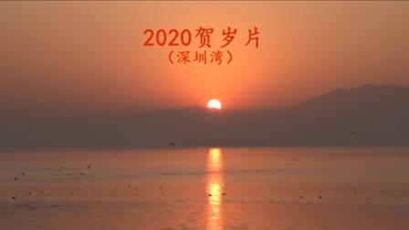 2020贺岁片 深圳湾