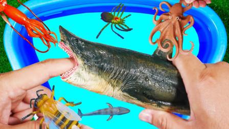 一起来认识鳄鱼鲨鱼老虎等动物吧