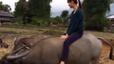 这个农村漂亮小媳妇胆子可真大,这样玩牛!这是大水牛不是猫