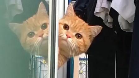 2019年走红的这些小猫咪,每一只都是可可爱爱