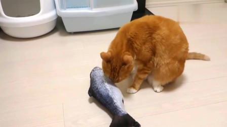 橘猫真没义气为了条假鱼,友谊的小船说翻就翻,以后谁敢跟你好呀
