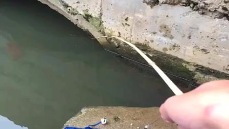 农村小河沟里的马口太多了,刚把鱼饵扔下去就接住了,真刺激!