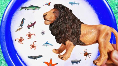 认识狮子蚂蚁大象等动物