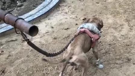 农村训练狗子的基地,看到眼前这一幕,太有创意了