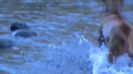 主人说想吃一条鱼,狗狗大展身手的时候到了,太聪明了