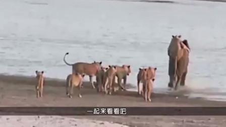 狮子想直接吃大象,一口咬住大象的脸,结果大象发怒了