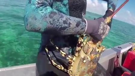 """澳大利亚男子潜入深海,竟意外收获""""怪物龙虾"""",大丰收"""
