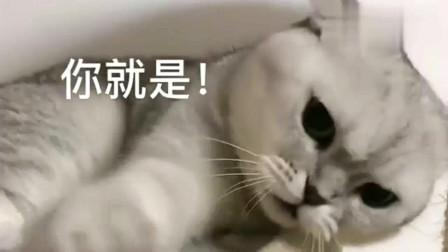 萌宠:猫咪以为主人有了别的猫,它竟向主人大打出手,占有欲太强了!