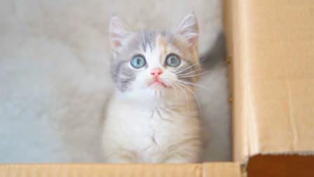 送两只小奶猫给女朋友,她会是什么反应?