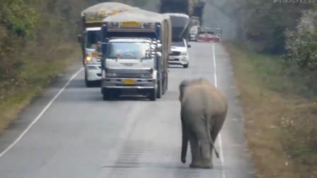 """不给吃的就挡路,泰国、斯里兰卡,出现""""拦路打劫""""的大象"""