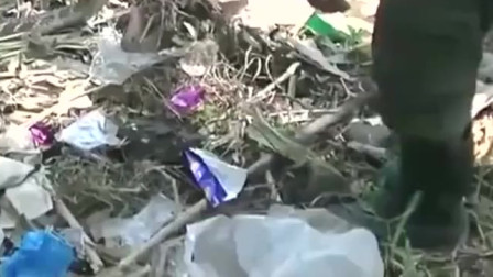 垃圾堆里发现一条超大眼镜王蛇,男子一个方法轻松将其抓获,太牛了
