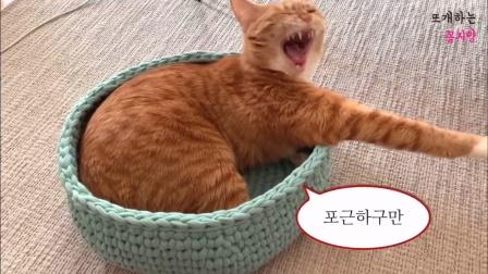 霞霞手作 布条线编织猫窝视频教程