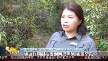 云南保山市回收红外相机,没想到有意外守护,拍到二级保护动物