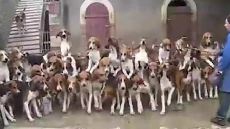 这只巴哥犬被主人送上了狗肉的笼子里,不断地流泪,站立扒着狗笼,看着好心酸