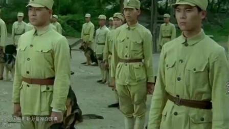 犬王:狼犬海龙为救主人壮烈牺牲,为大小龙犬被送往军犬基地