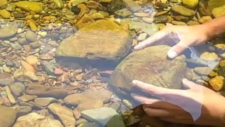 农村小伙来河里抓鱼,小心翼翼的翻开石头,结果还真有大货被抓,厉害了!