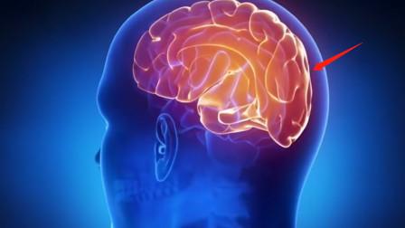 人类的大脑相当于多少电脑内存?看完我愣了:自己怕是长了个假脑子!