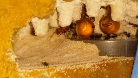"""地底挖出的""""黄金葡萄"""",一口一个,网友:不敢吃"""