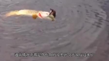 一男子发现水面波动异常, 当走近一看的时候吓一跳, 还好镜头拍下全过程