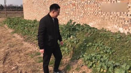 农村小伙带女友回家,小伙下地拔野菜,准备给她做好吃的