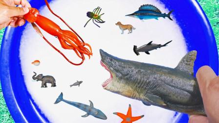认识老虎棕熊水牛等野生动物 还有海洋生物昆虫哦