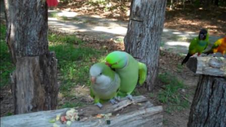 雄鹦鹉见到雌鹦鹉后,瞬间开始卖萌搞怪还自带音效,游客看到乐坏了