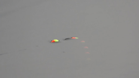 钓鱼:水草边上打扔点料,几分钟后就发窝!