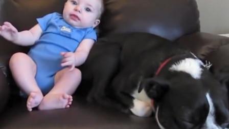 宝宝枕着狗子躺在沙发上,不料下秒宝宝放了个屁,狗子反应太搞笑
