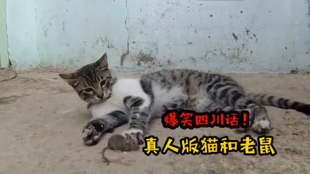 四川方言:真人版猫和老鼠闹笑话,笑看汤姆猫大显神威抓老鼠