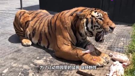 看到活驴被抛入老虎园,场面惨烈,网友:动物园违背了人道主义