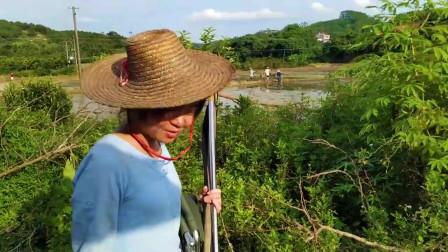农村小媳妇被称钓鱼界的空姐号,第次得大货,手忙脚乱,差点连人带鱼跌水里