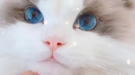 火爆网络的猫咪,颜值逆天眉清目秀,网友:不敢养,怕它嫌我丑!