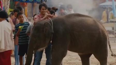 千万不要惹泰国的大象,特别是拳王的大象