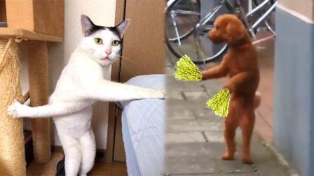 舞姿魔性!动物界的那些沙雕舞王