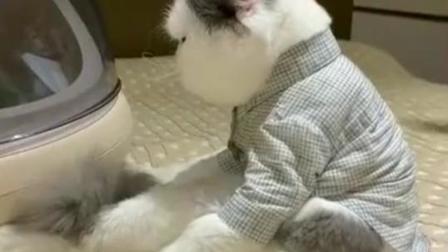 萌宠:如何让生病的猫咪快速吃药,用这一招快速见效