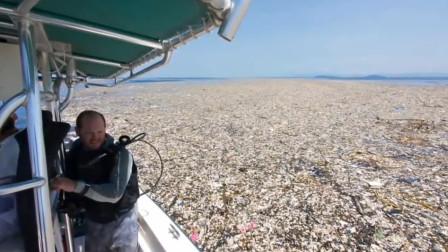 """太平洋发现""""第八大陆"""",由400万吨垃圾组成,面积堪比四个日本"""
