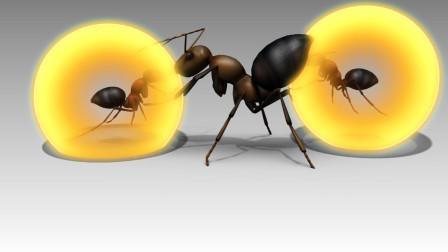 一言不合就爆炸的蚂蚁,少有动物赶去招惹,看见请远离