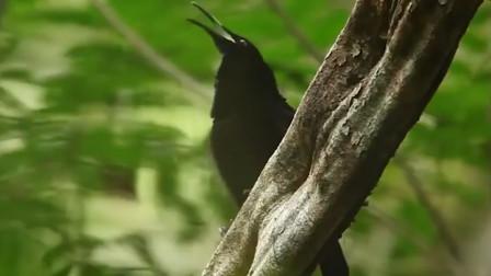 如果亚马逊雨林被烧光了,对我们有不好的影响吗?